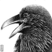 Crow Square 2010