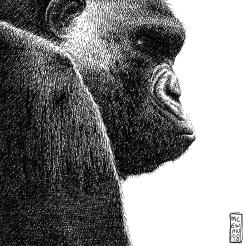 Gorilla 2010